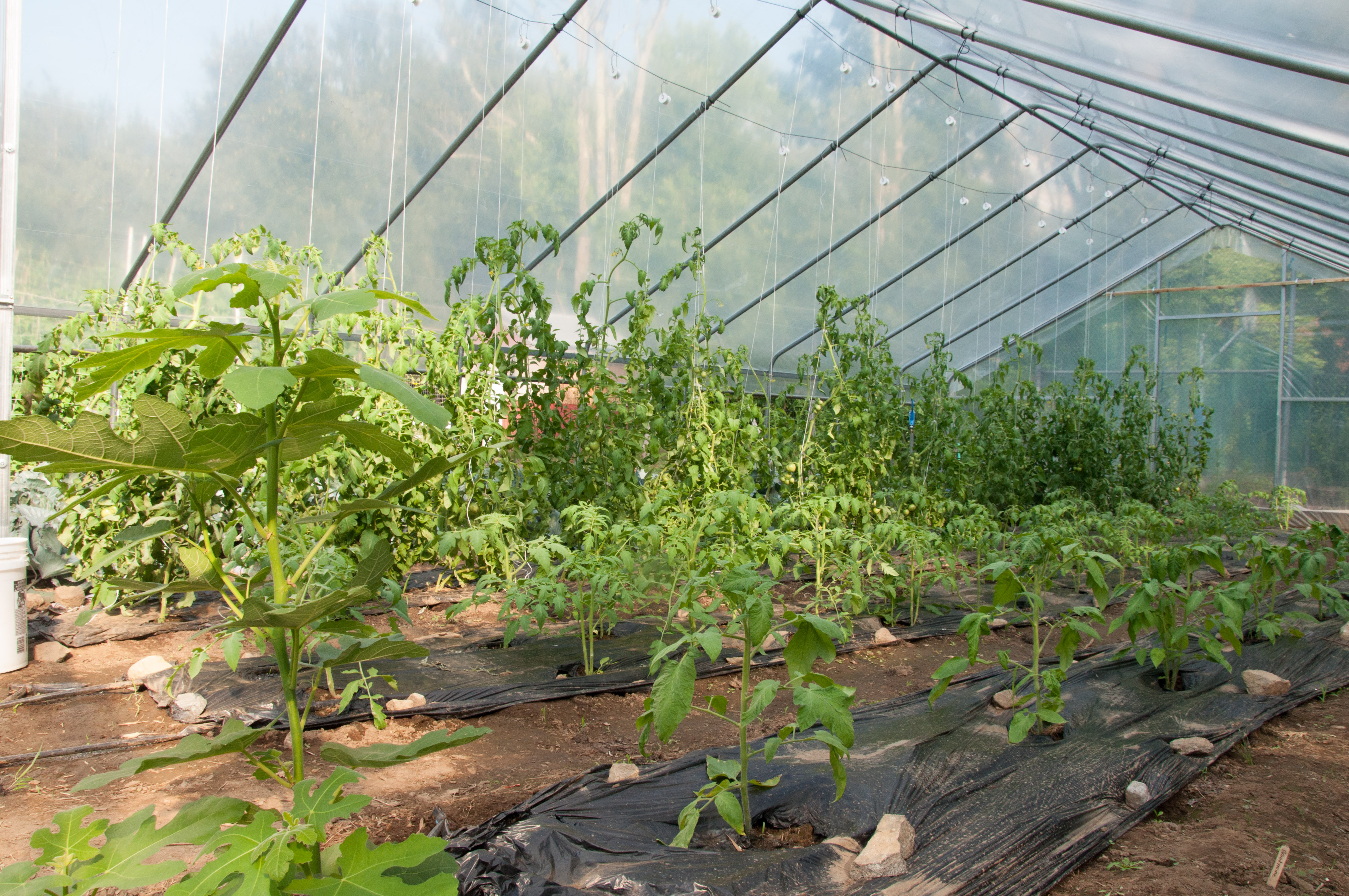 vertical growing andalusia farms